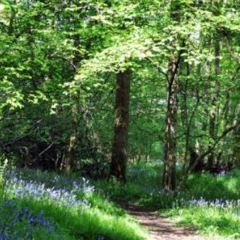 Bowdown Woods